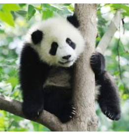 Zen Art & Design Panda (Sm, 126 Pieces, ZEN Wooden Jigsaw Puzzle)