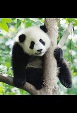 Zen Art & Design Panda (Teaser, 50 Pieces, Artisanal Wooden Jigsaw Puzzle)