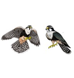 Jabebo Earrings FALCON (APLOMADO)
