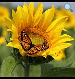 Zen Art & Design Sunflower (Teaser, 50 Pieces, Artisanal Wooden Jigsaw Puzzle)