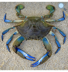 Zen Art & Design Blue Crab (Lg, 299 Pieces, Artisanal Wooden Jigsaw Puzzle)