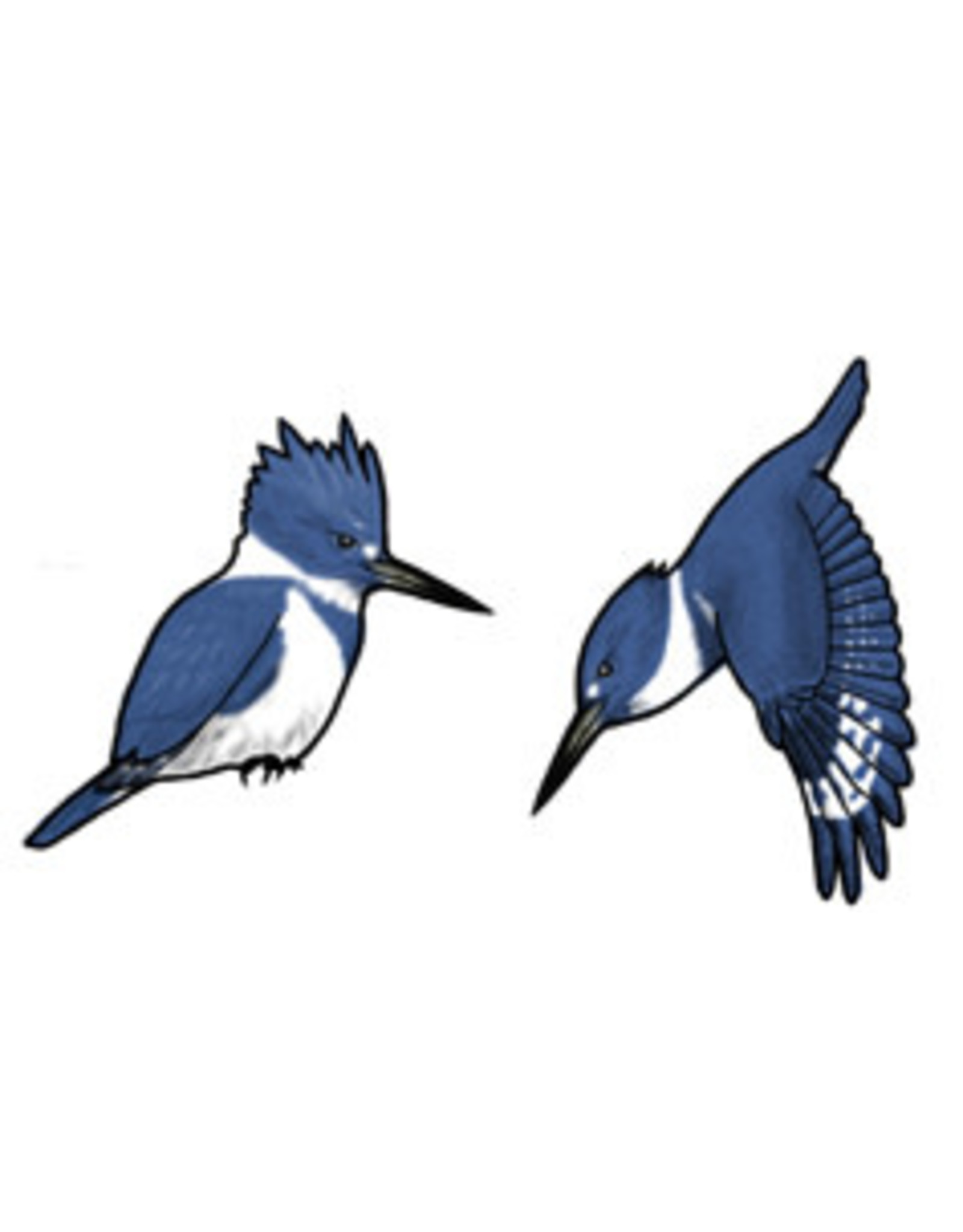Jabebo Earrings KINGFISHER (BELTED, JABEBO)
