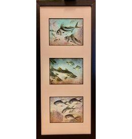 HeARTS 4 Hospice GYOTAKU FISH PRINT (Ken Dara, Triples, Vertical, Framed, H4H 20008)