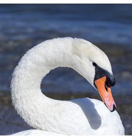 Zen Art & Design White Swan (Teaser, 50 Pieces, Artisanal Wooden Jigsaw Puzzle)