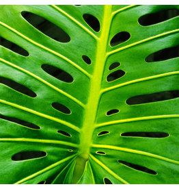Zen Art & Design Monstera Leaf (Sm, 125 Pieces, Artisanal Wooden Jigsaw Puzzle)