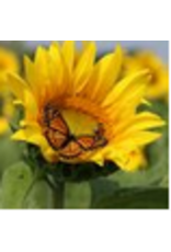 Zen Art & Design Sunflower (Md, 202 Pieces, Artisanal Wooden Jigsaw Puzzle)