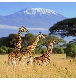 Zen Art & Design Giraffe Safari (Teaser, 49 Pieces, Artisanal Wooden Jigsaw Puzzle)
