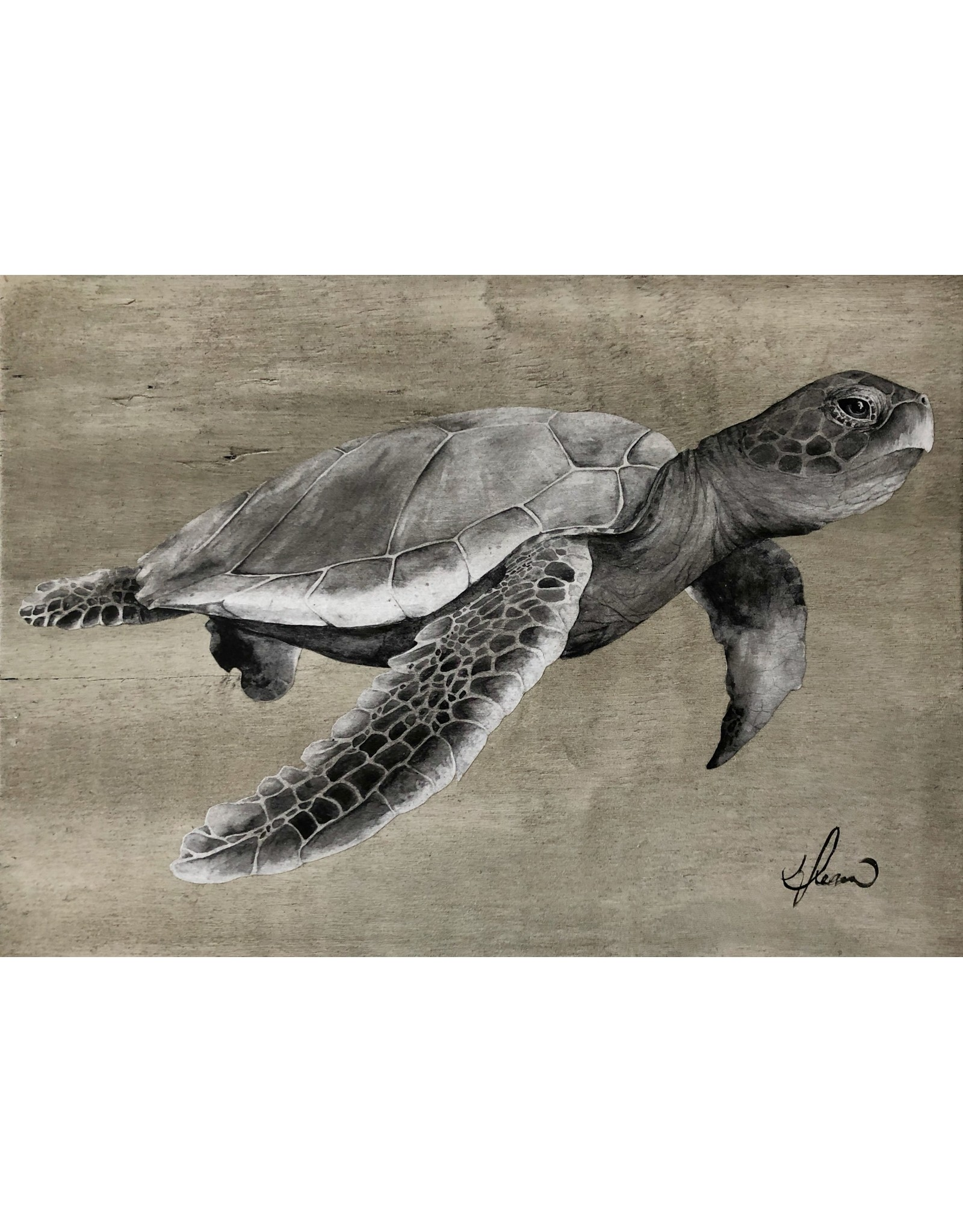 "Molly Pearce Loggerhead Turtle 17x24"""" MOLP)"