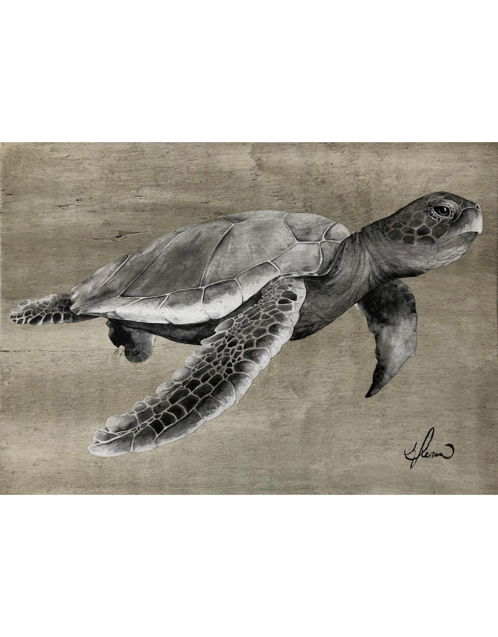 "Molly Pearce Loggerhead Turtle (gray) 17x24"""" MOLP)"