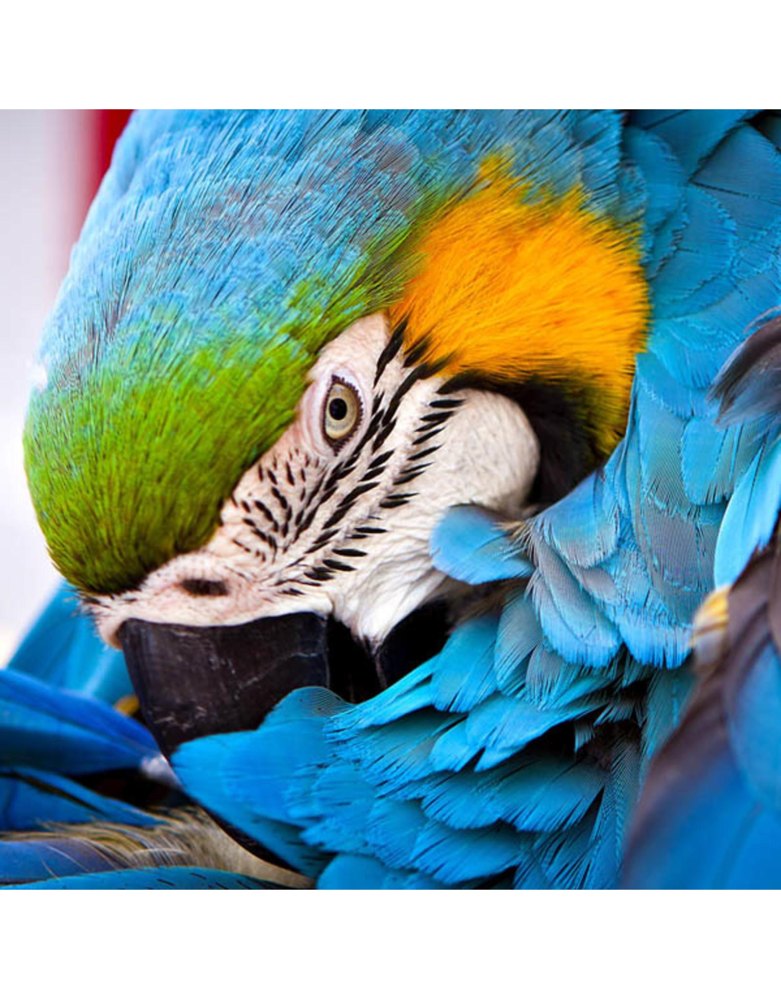 Zen Art & Design Blue Parrot (Sm, 126 Pieces, ZEN Wooden Jigsaw Puzzle)