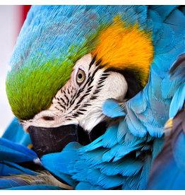 Zen Art & Design Blue Parrot (Teaser, 49 Pieces, ZEN Wooden Jigsaw Puzzle)
