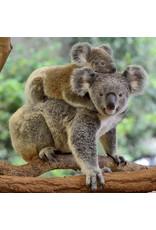 Zen Art & Design Koalas (Teaser, 50 Pieces, ZEN Wooden Jigsaw Puzzle)