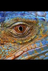 Zen Art & Design Blue Iguana (SM, 126 Pieces, ZEN Wooden Jigsaw Puzzle)