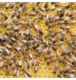 Zen Art & Design Busy Bees (Teaser, 50 Pieces, ZEN Wooden Jigsaw Puzzle)