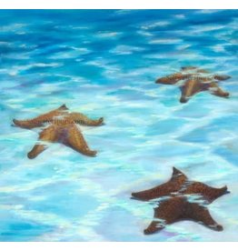 Susan Roberts SEA STARS (Giclee, Ltd. Ed, Gallery Wrap, 8x10, SUSR)