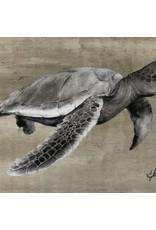 "Molly Pearce Loggerhead Turtle,  (11x17"" MOLP)"