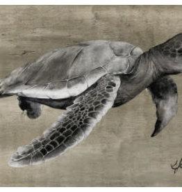 Molly Pearce Loggerhead Turtle,  (17x11 MOLP)
