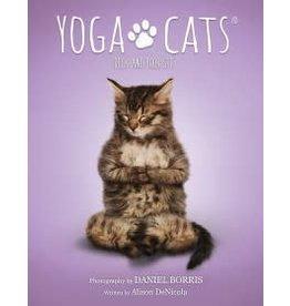 Yoga Cats Deck & Book Set