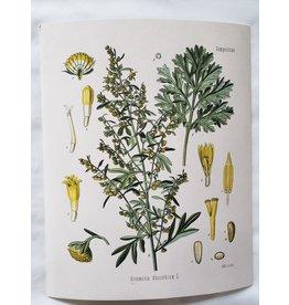 Curious Prints Vintage Botanical Wormwood Absinthe Plant Print - 8x10