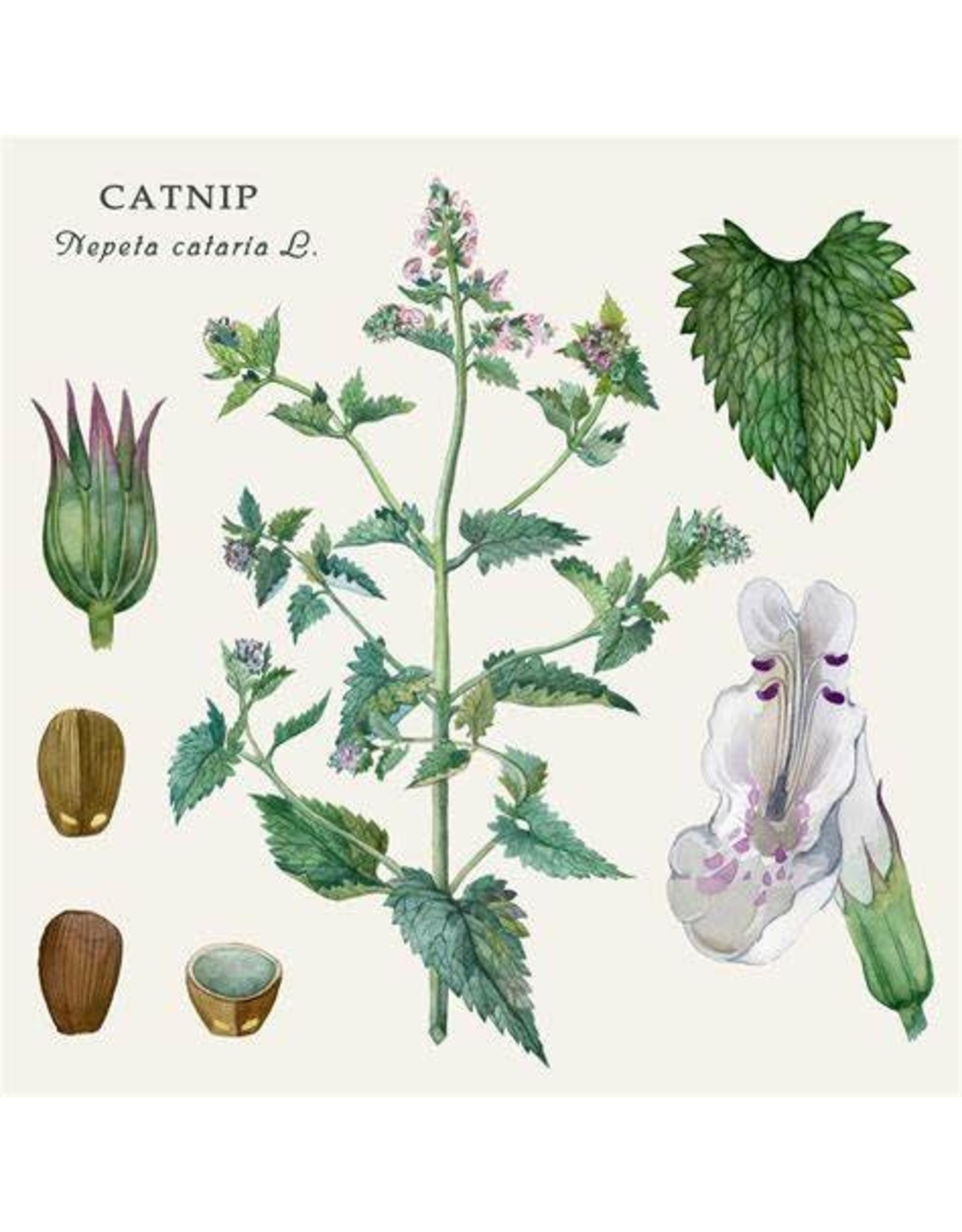 Catnip | 1/2 oz.