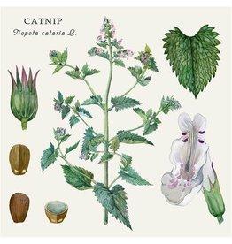 Catnip - Organic