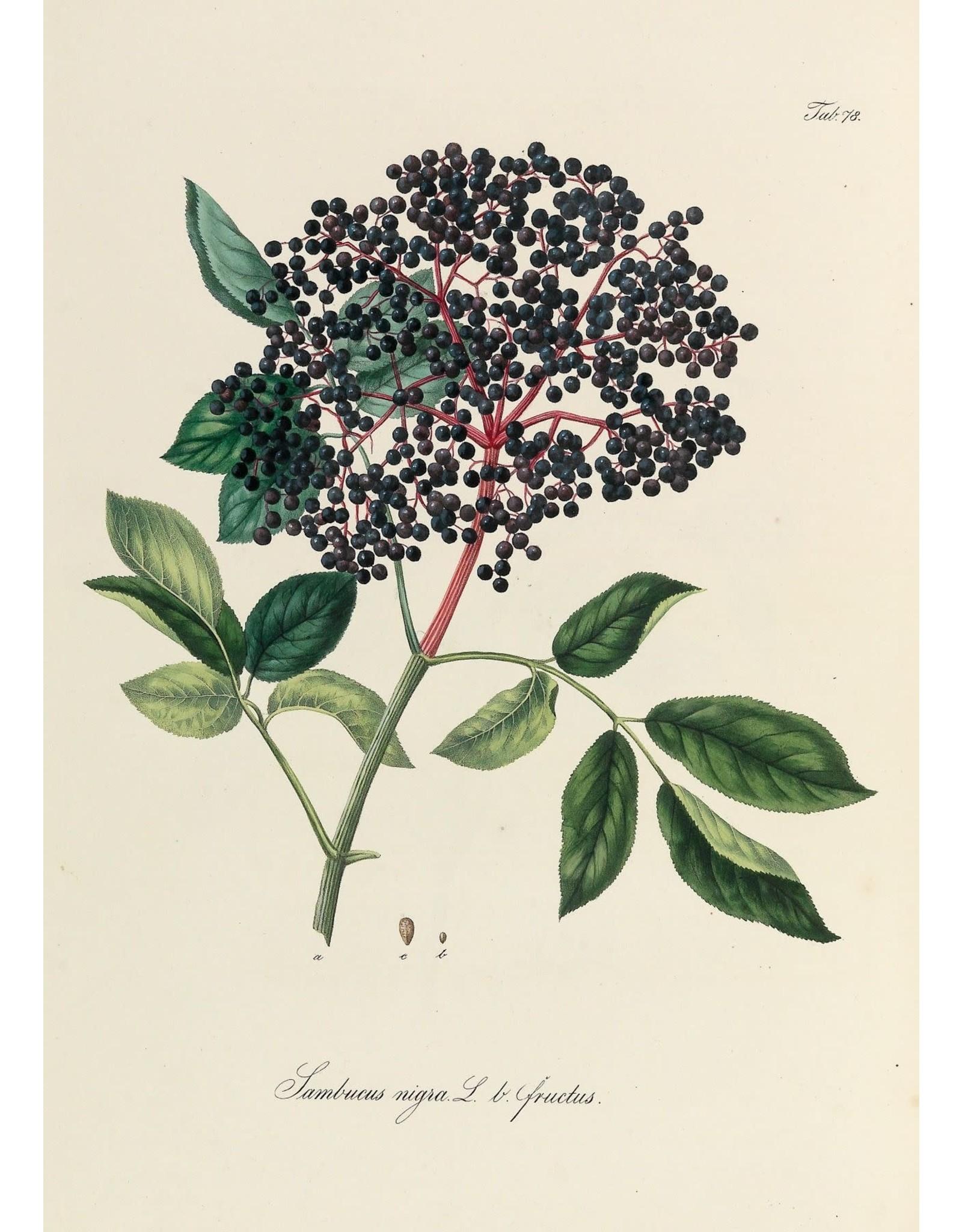 Elder Berries   1/2 oz.