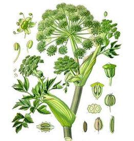 Starwest Botanical Angelica Root | 1/2 oz.