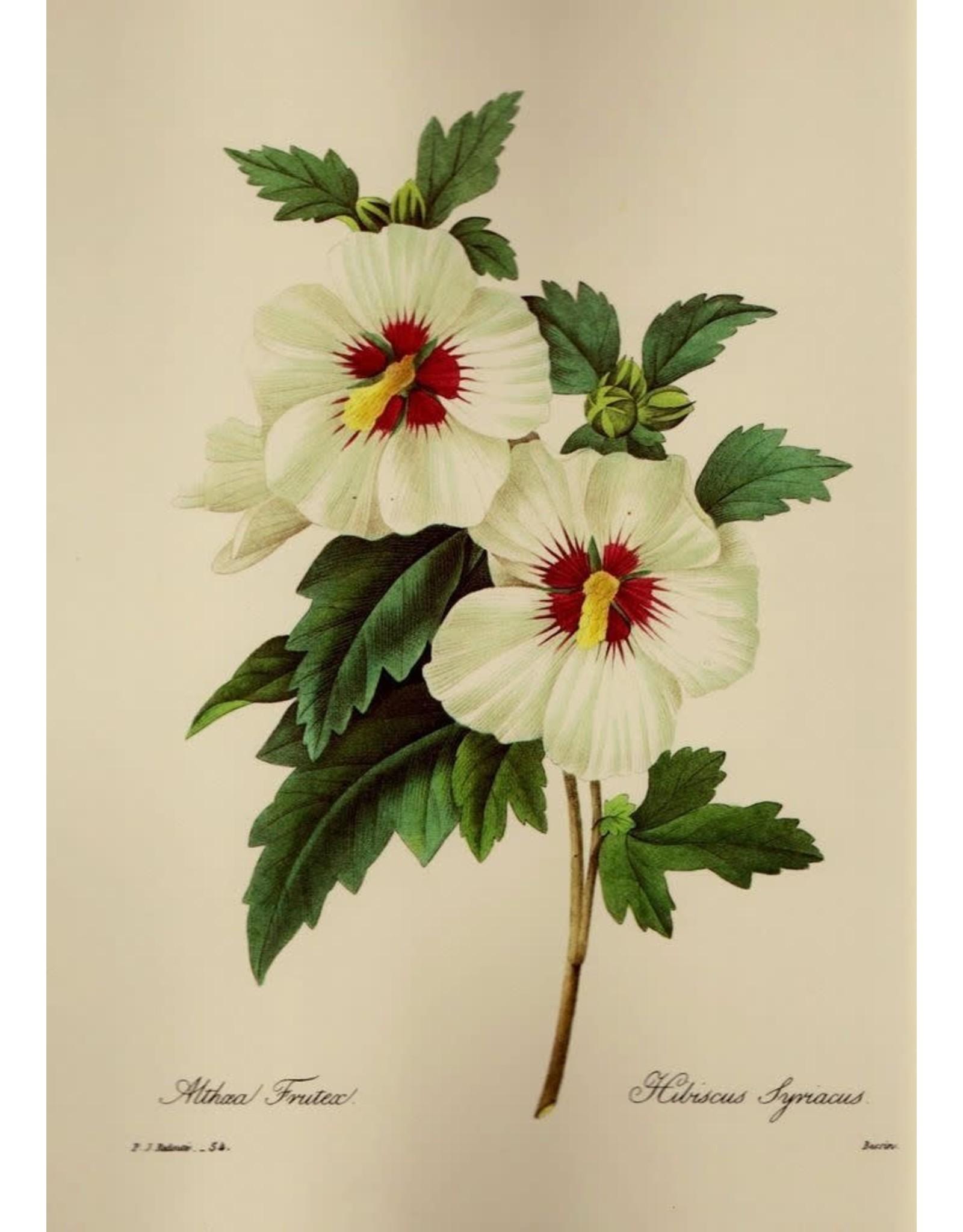 Hibiscus Flowers | 1/2 oz.