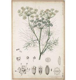 Fennel Seed | 1/2 oz.