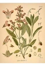 Garden Sage Leaf   1/2 oz.