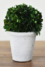 "Home & Garden 7"" Preserved Boxwood Faux Plant"