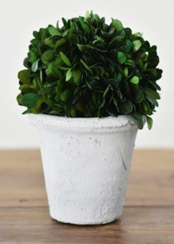 """Home & Garden 7"""" Preserved Boxwood Faux Plant"""