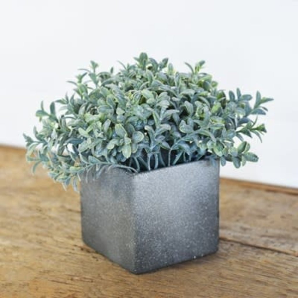 Pd Home & Garden Bonsi WIth Pot