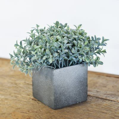 Pd Home & Garden Bonsi WIth Pot
