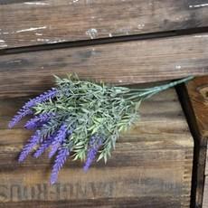 Pd Home & Garden Lavender Bush