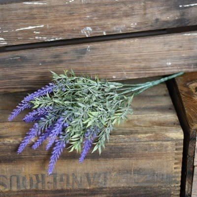 Pd Home & Garden Lavender Bush