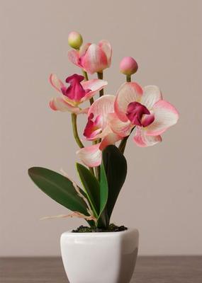 Audrey's Mini Cream & Pink Floral Pot