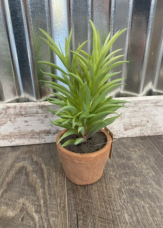 Pd Home & Garden Faux Needle Succulent