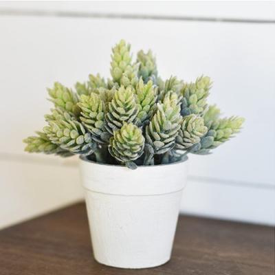 Pd Home & Garden Mini Hop Plant in Pot