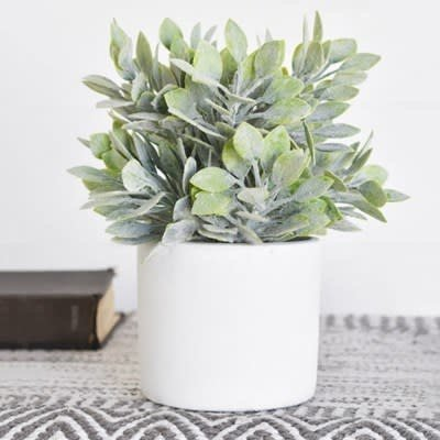 Pd Home & Garden Small Green Potted Plant