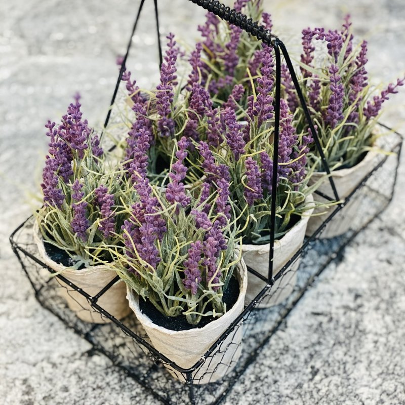 Mud Pie Lavender Pot Set of 6 Centerpiece