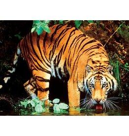 Ceaco Bengal Tiger - 1000 Piece Puzzle