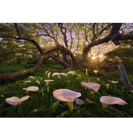 Heye Calla Clearing - 1000 Piece Puzzle