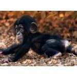 Springbok Monkey Business 100 pc