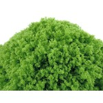 Huge Miniatures Bright Green Loose Foliage