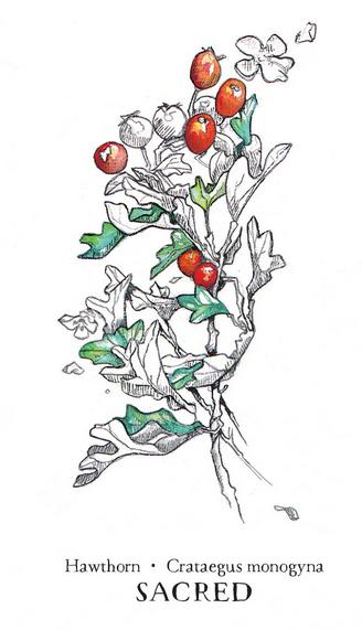 Hedgewitch Botanical Oracle Box Set-3