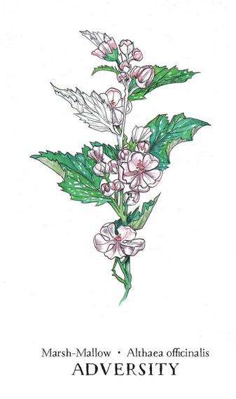 Hedgewitch Botanical Oracle Box Set-4