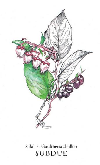 Hedgewitch Botanical Oracle Box Set-5