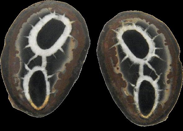 Septarian Nodule Pairs | Small-1