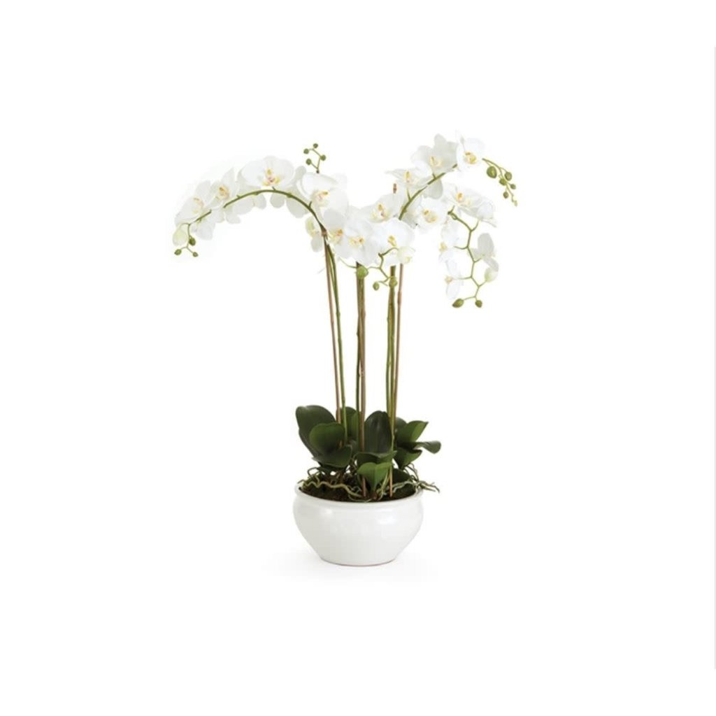Napa Home and Garden Large 30'' Orchid in Ceramic Bowl